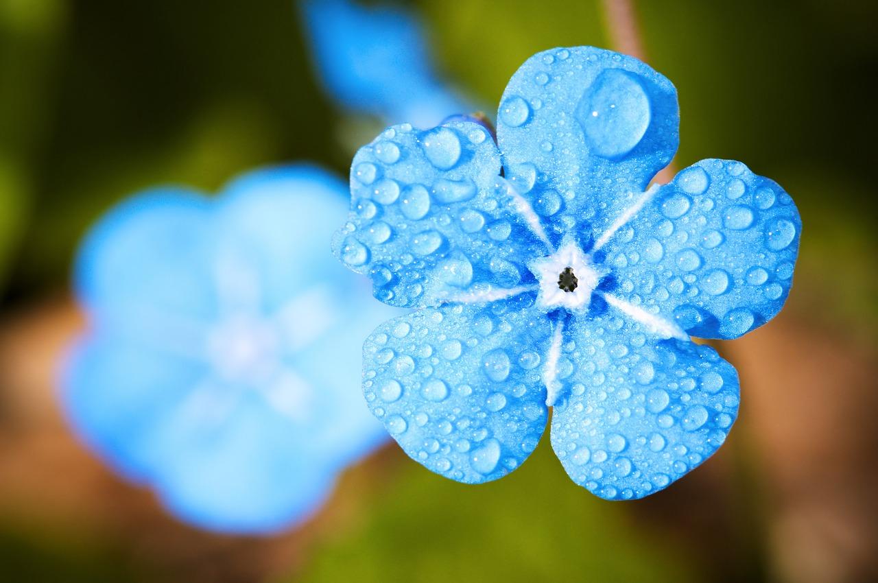 flower-2197679_1280